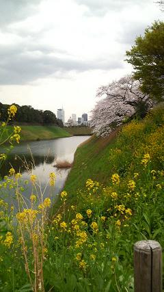 2008花見.JPG