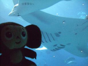 水族館�B.JPG