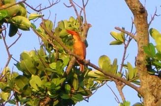 竹島の鳥.JPG